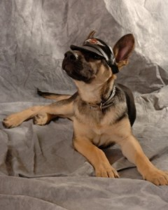 150923_harley-dog